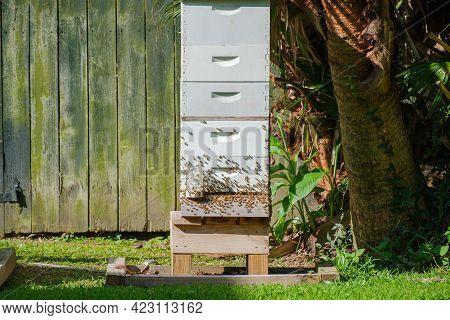 Active Bee Hive In New Orleans Neighborhood
