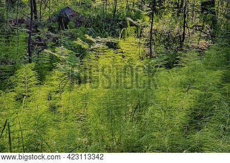 The Landscape In Which The Horsetail Is Filmed In This Image Has All Shades Of Green, From Cold Blue
