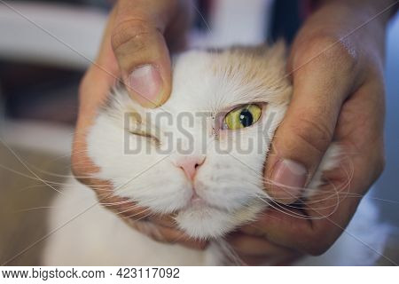 Hand Of Persons Stroking Caress Monocular One-eyed Lying On The Floor Cat, Taken Homeless From The S