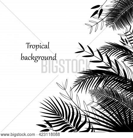 Tropical Background With Palm Leaves. Corner, Border Of Silhouettes Of Exotic Tropical Branches And