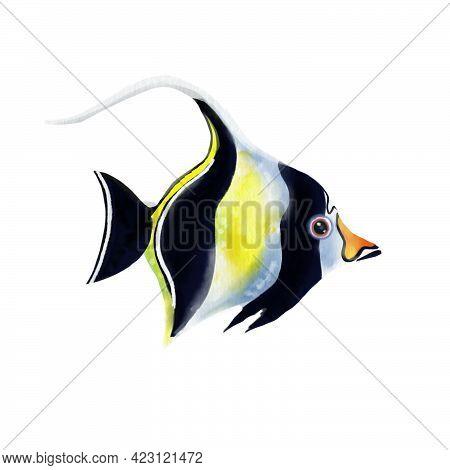 Moorish Idol Tropical Fish Isolated On White Background. Zanclus Cornutus.