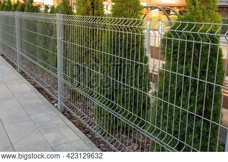 A Metal Mesh Fence Encloses A Private Area. Thuja Hedge Behind A Metal Fence
