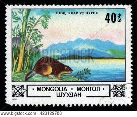 Mongolia - Circa 1982: Mongolian Postage Stamp Dedicated To Beaver. River Inhabitant. Beaver On Rive