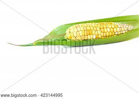 Fresh Corns, Corn And Corn Leaves On White, Copy Space