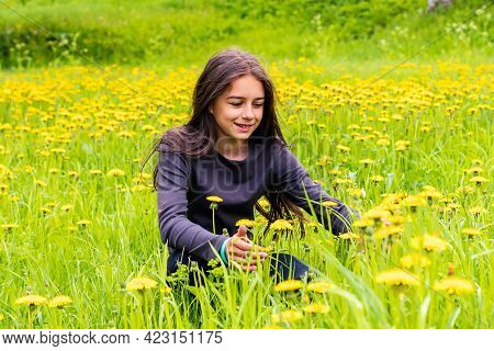 A Cute Teenage Girl With Dark Long Hair Sits On A Meadow Among Blooming Yellow Dandelions.