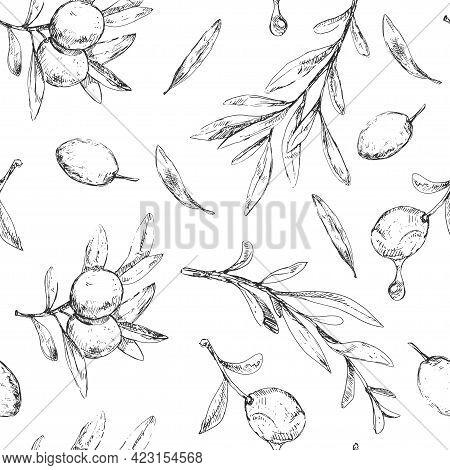 Vintage Pattern, Olive Berries, Leaves And Branch