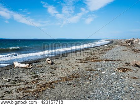 Scenic Beach On The Dungeness Spit, The Longest Sand Spit In The Us - Olympic Peninsula, Washington