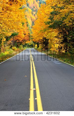 Forest Road Mid-Line In Fall