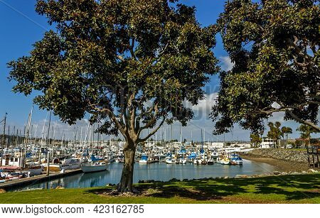 San Diego,ca - April 13,2014:san Diego Marina, Pleasure Boats In The Background.
