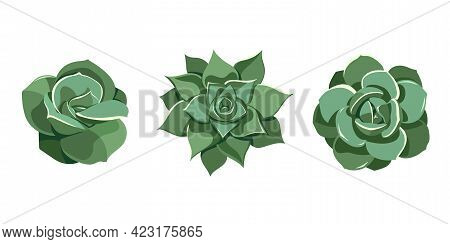 Succulent Set Green Echeveria, Lovely Rose, Laui, Agavoides. Hand Drawn Plant In Cartoon Style. Grap