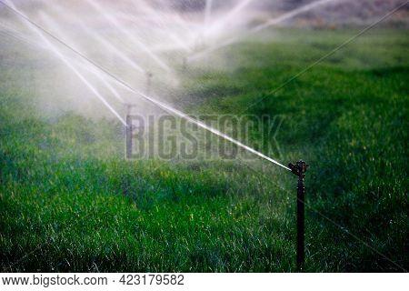Farming sprinklers waterlines in field for irrigation and watering of crops