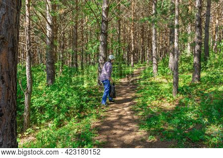 One Woman In Her 50s Is Walking With A Small Dog In A Pine Forest. A Woman Is Resting In The Forest