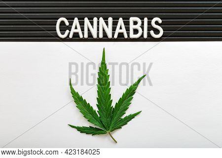 Cannabis Sativa Weed Legalize. Cannabis Text Lettering And Green Hemp Leaf On White And Black Stripe