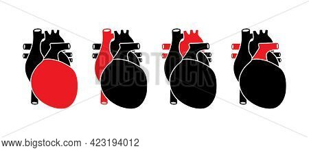 Human Heart With Red Selected Parts. Anatomically Correct Organ Illustration.