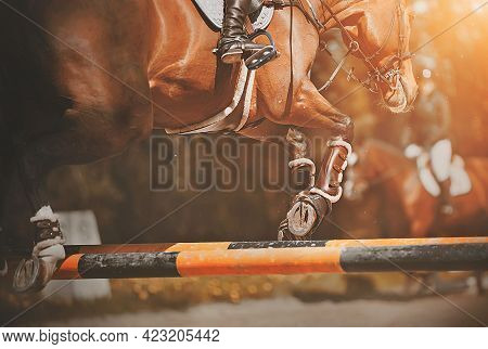 A Beautiful Bay Shod Racehorse With A Rider In The Saddle Jumps Over The High Yellow Barrier At A Sh