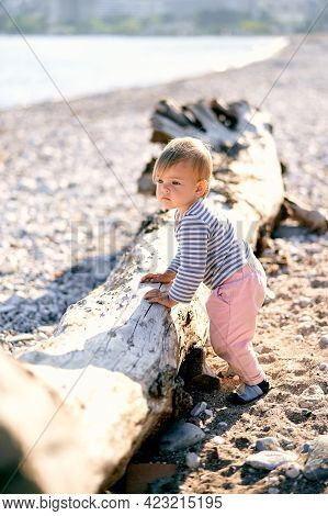 Child Stands Near An Old Driftwood On The Seashore