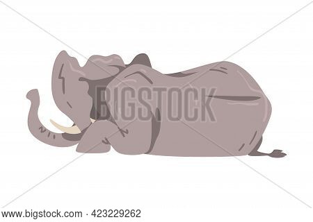 Lying Elephant As Large African Animal With Trunk, Tusks, Ear Flaps And Massive Legs Vector Illustra