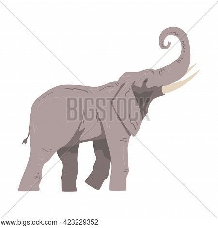Walking Elephant As Large African Animal With Trunk, Tusks, Ear Flaps And Massive Legs Side View Vec