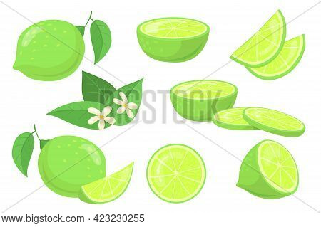 Whole And Cut-up Limes With Leaves Vector Illustration Set. Different Elements Of Green Juicy Citrus