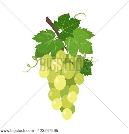 White Wine Grape Icon. Green Table Grapes Bunch With Berries And Leaves Isolated On The White Backgr