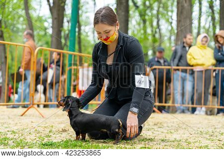 Female Handler Wearing Protective Medical Mask On Her Face, Puts Obedient Dachshund Puppy In The Cor