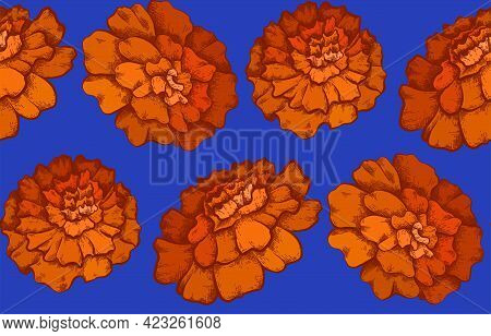 Seamless Pattern With Colorful Botanical Sketch Of Marigold Flowers On Blue Background. Vector Texti