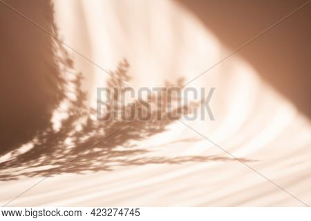 Pampas Grass Natural Shadows On A Beige Wall Or Table. Floral Silhouette On Beige Background - Image