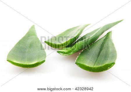 Aloe Vera Plant Isolated On White