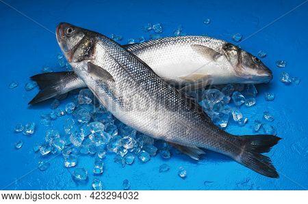 Seabass Fish On Ice On Blue Background