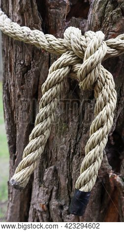 A Brown Rope Knotted Securely To A Sturdy Tree Trunk. Close-up Of The Knot. Rope Around The Tree Tru