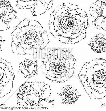 Flower Pattern Roses. Ornament Drawn By A Black Line Vector On A White Background