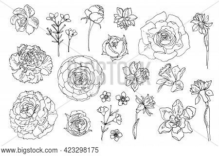 Flowers Line Drawn On A White Background. Vector Sketch Of Flowers. Roses, Daffodils, Radiluncus