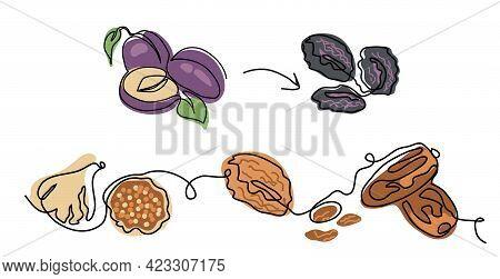 Dried Fruits Minimalist Vector Illustration. Prunes, Dried Plums, Apricots, Figs, Raisins, Dates. Fr
