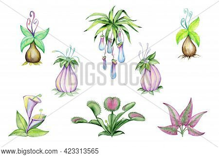 Watercolor Set Of Exotic Plants. Plant Predators, Such As The Venus Flycatcher, Sun Dew, And Others,