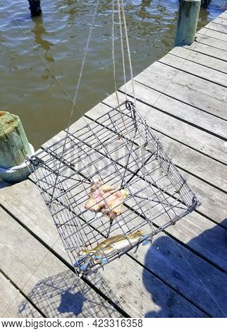 A Crab Trap Filled With One Blue Crab On The Dock