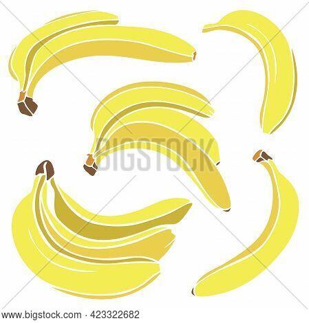 Vector Illustration With Collection Of Bananas. Fresh Bananas And Bunch Of Bananas Set.