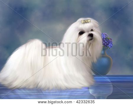 The Maltese dog is a small breed of dog in the Toy group which developed from the Mediterranean Region. poster