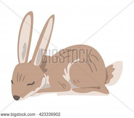 Sleeping Hare Or Jackrabbit As Swift Animal With Long Ears And Grayish Brown Coat Vector Illustratio
