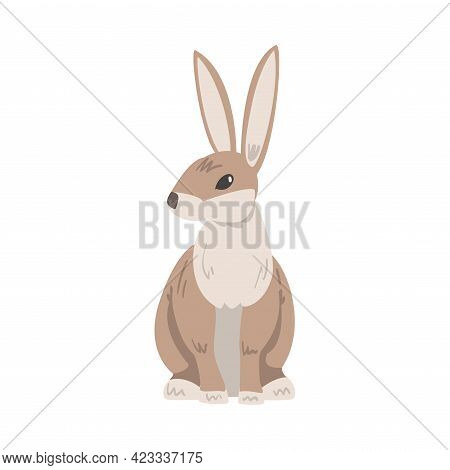 Sitting Hare Or Jackrabbit As Swift Animal With Long Ears And Grayish Brown Coat Vector Illustration