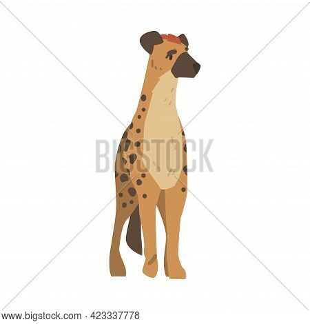 Hyena As Carnivore Mammal With Spotted Coat And Rounded Ears Standing Vector Illustration
