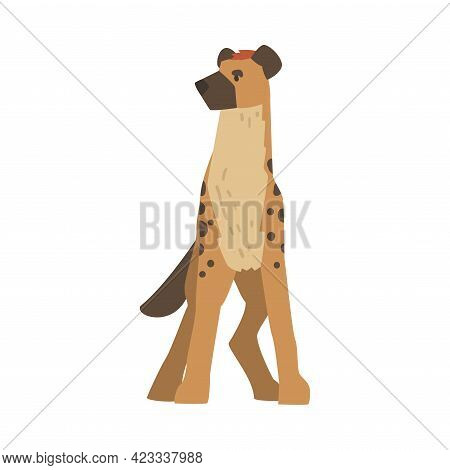 Hyena As Carnivore Mammal With Spotted Coat And Rounded Ears Standing Front View Vector Illustration