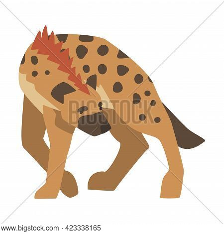 Hyena As Carnivore Mammal With Spotted Coat And Rounded Ears Walking Vector Illustration