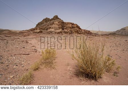 A Desert Landscape With Bushes, Red Sand And Red Rocks, In The Timna Valley Park In Southern Israel.
