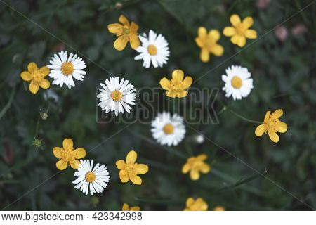 Closeup of yellow and white wildflowers on blurred green background. Natural floral landscape, ecology cover page concept