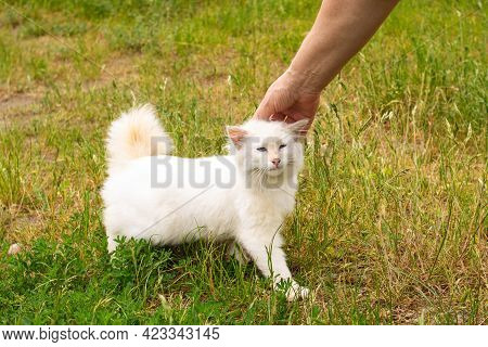 Hand Caressing A White Kitten On Green Grass Close Up