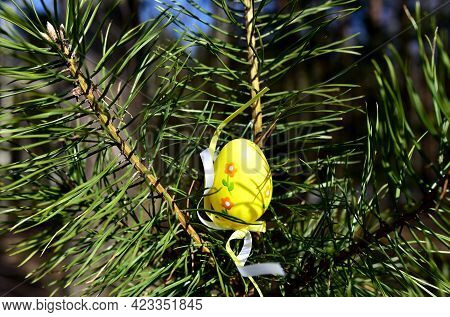 Easter Egg On Pine Branches. Egg Painted Yellow For Festive Table On Day Of The Feast Of Liturgical