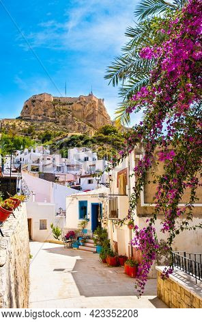 Alicante Old Town And Santa Barbara Castle. Narrow Street With White Houses And Purple Flowers On Hi