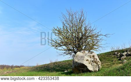 Ancient Historical Huge Stone Near A Tree In A Field With Green Grass Against A Blue Sky. Big Boulde
