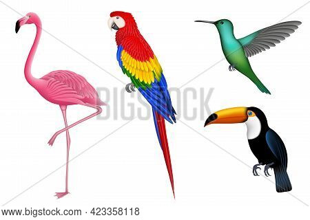 Set Of Isolated Exotic Birds. Tropical Birds For Summer Backgrounds. Flamingo, Parrot, Hummingbird A