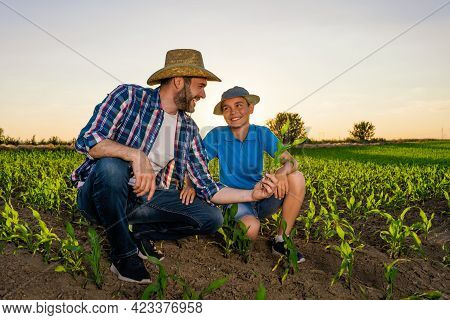 Family Farmers Are Standing In Their Growing Corn Field. They Are Examining Crops After Successful S